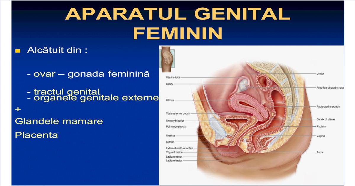 Aparatul genital feminin la menopauza